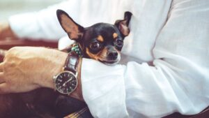 private jet charter pet friendly